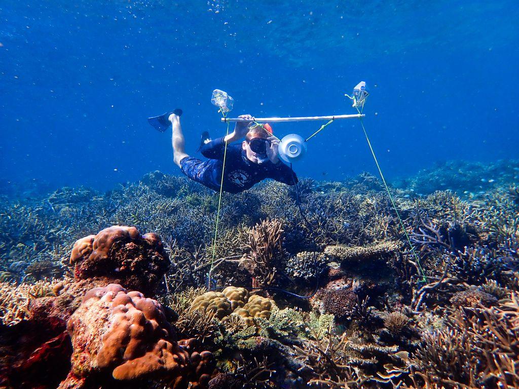 Tim Gordon sets up an underwater loudspeaker on a coral reef.