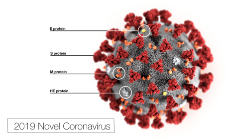 This illustration, created at the Centers for Disease Control and Prevention (CDC), reveals ultrastructural morphology exhibited by the 2019 Novel Coronavirus (2019-nCoV).