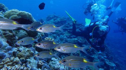 Divers palau 2016