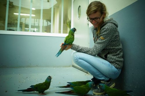 Blue-headed macaws are shown with Dr. Désirée Brucks.