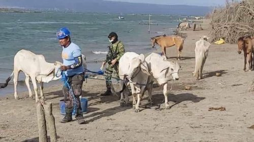 The Philippine National Police Maritime Group personnel conducted seaborne patrol, clearing and force evacuation of remaining residents and domestic animals at Brgy. San Isidro and adjacent Barangays at Talisay, Batangas. (PNP Maritime Group)