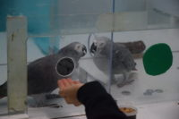 An African grey parrot shares a token in order to help another parrot get a reward.