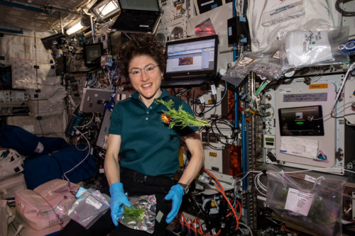 (Nov. 13, 2019) --- NASA astronaut Christina Koch collects and packs Mizuna mustard greens grown and harvested inside the International Space Station's Veggie botany facility located in the Columbus laboratory module.. A portion of the leaves were consumed by the crew for a taste test while the rest were stowed in a science freezer for analysis on Earth.