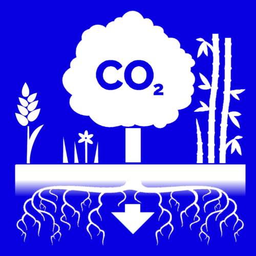 The graphic displays the natural process of carbon dioxide capture from a variety of flora. Shown in the image are cover crop sorghum, grass and flowers, a tree, and bamboo. The roots bring the carbon dioxide underground as shown by the arrow.