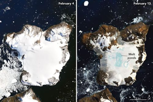 Before-and-after snapshots showing the rapid melting of the snowpack on Eagle Island at the tip of the Antarctic Peninsula over nine days.