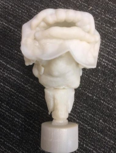 3D-printed vocal tract of Nesyamun