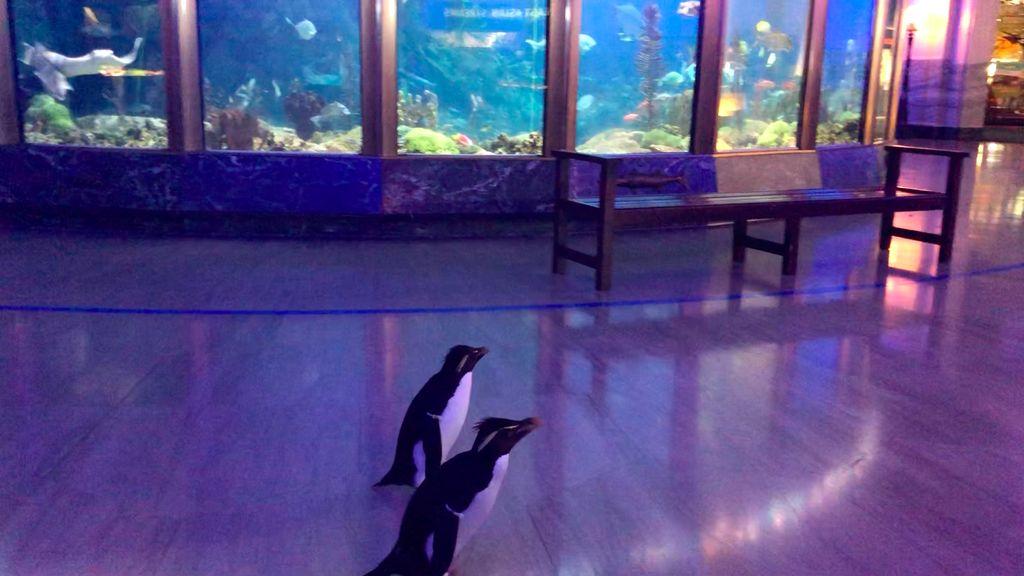Edward and Annie walk past the aquarium.