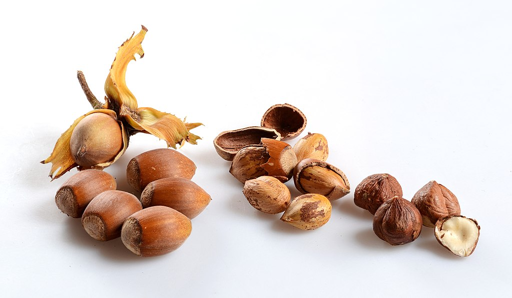 Hazelnuts (Corylus avellana) in different states: Ripe, opened, and dried. This picture is a stack of 10 single images