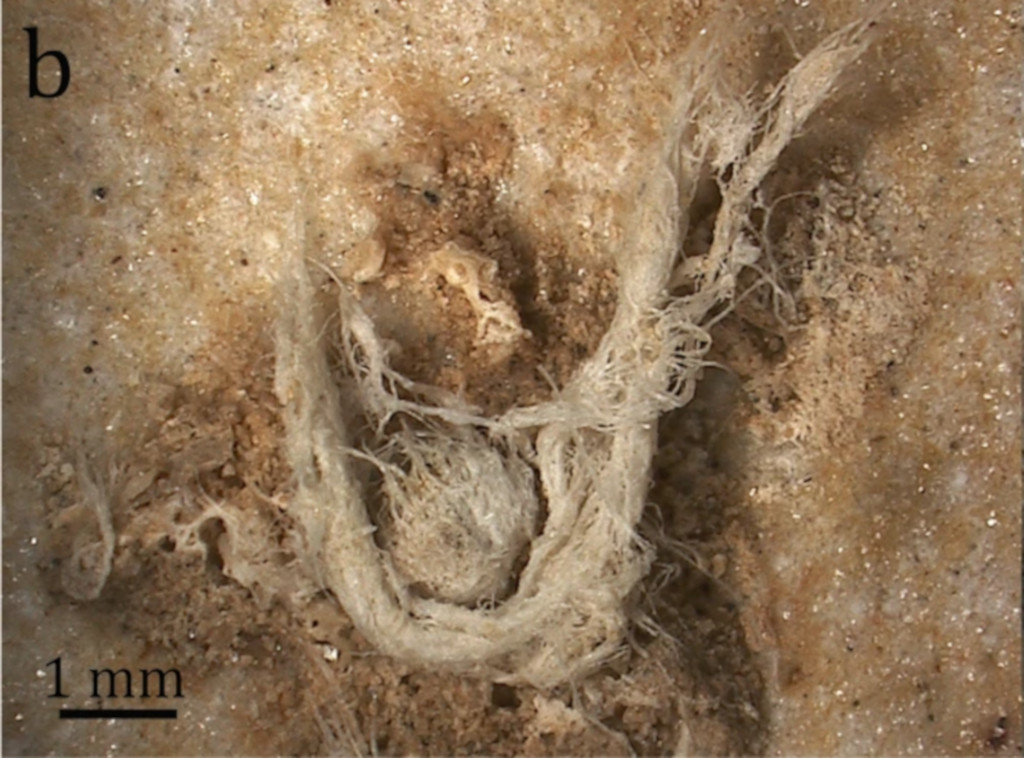 Detail of 50,000-year-old string.