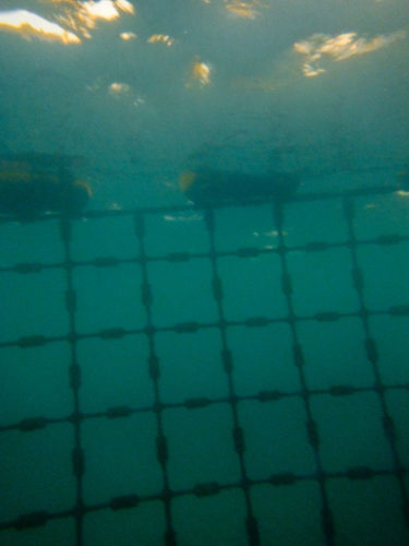 Shark net at Coogee Beach Western Australia