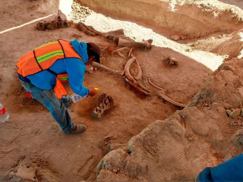 Archeologist spraying mammoth bones found during excavation at location of new international airport in Mexico City.