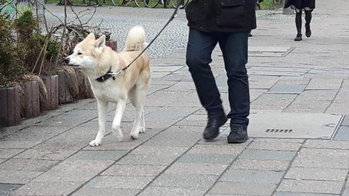 Man walks dog down sidewalk in Berlin.