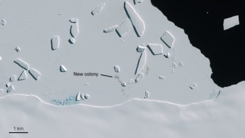 Satellite image showing new Emperor penguin colony at Cape Gates, Antarctica.