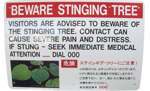A sign warning about stinging trees.