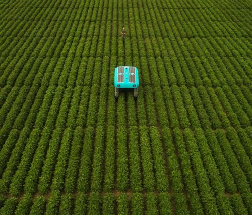 Aerial view of one of Mineral's solar-powered plant buggies in the middle of a green field of plants.