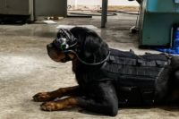 A dog wearing augmented reality goggles.