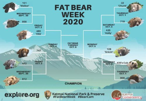 The bracket for the Fat Bear Week contest run by Katmai National Park and Preserve.
