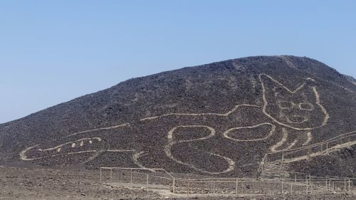 Picture of newly discovered cat Nazca line in Peru.