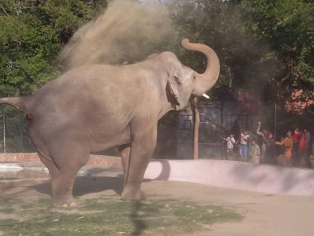 Kaavan in the Islamabad Zoo, 2017.