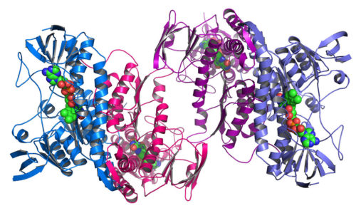 This structure represents a dehydrogenase enzyme from the bacteria Colwellia psychrerythraea. The enzyme is capable of generating harmful reactive oxygen species and has been implicated in neurodegeneration, ischemia-reperfusion, cancer and several other disorders.