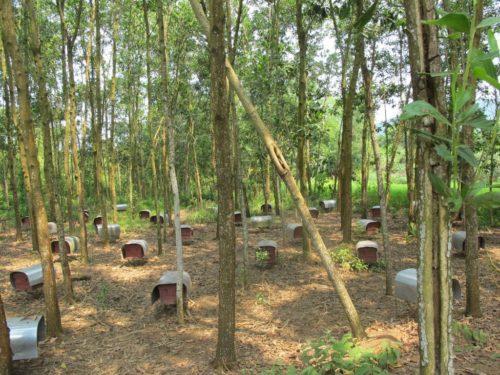 Beehives in Vietnam.