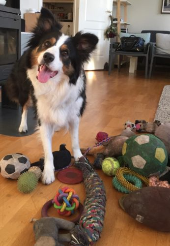 Whisky among his toys
