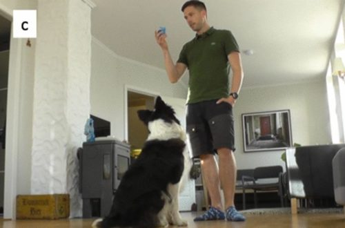 Whisky during a social test with the owner.