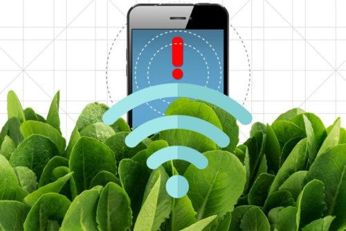 An illustration of spinach leaves sending a wireless signal to a cell phone.