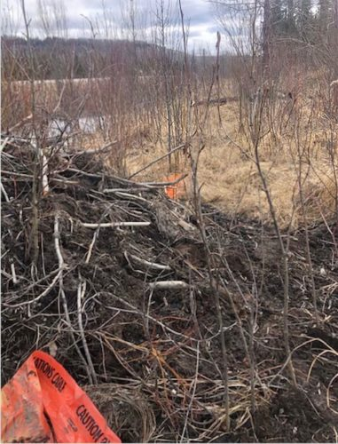 Beaver dam with tape from internet cable installation.