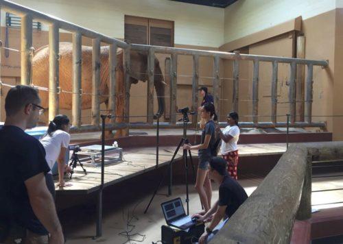 Elephant research area at Zoo Atlanta