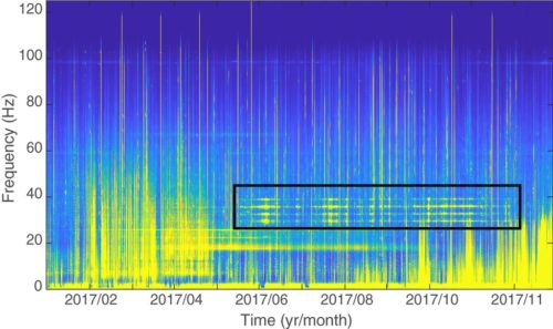 Long-term spectrogram of audio from the Chagos Archipelago with the songs of the new population of pygmy blue whales outlined in black.