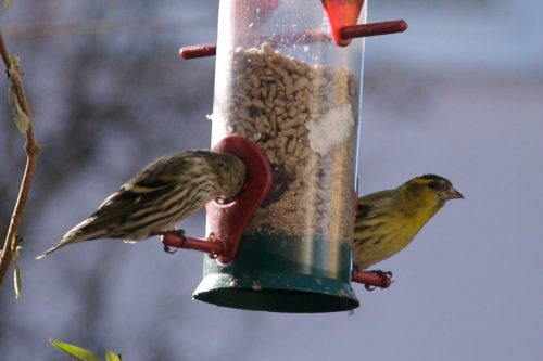 Birds coming and going at the bird feeder