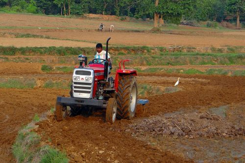 A farmer in India plows his field with a tractor even as another in a field behind his does the same with a pair of oxen. An Indian heron in the vicinity of the tractor is foraging in the freshly plowed earth for worms