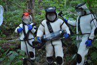 Workers wearing protective suits stand near a nest of Asian giant hornets.