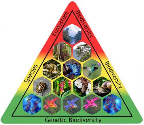 Biodiversity Pyramid with the 3 pillars - Ecosystem Biodiversity, Species Biodiversity, and Genetic Biodiversity - interwoven.