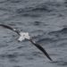 Albatrosses Help Locate Illegal Fishing Boats