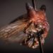 Treehopper Insect Named After Lady Gaga