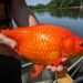 News Roundup: South Africa Protests, Venice Ships, & Huge Goldfish